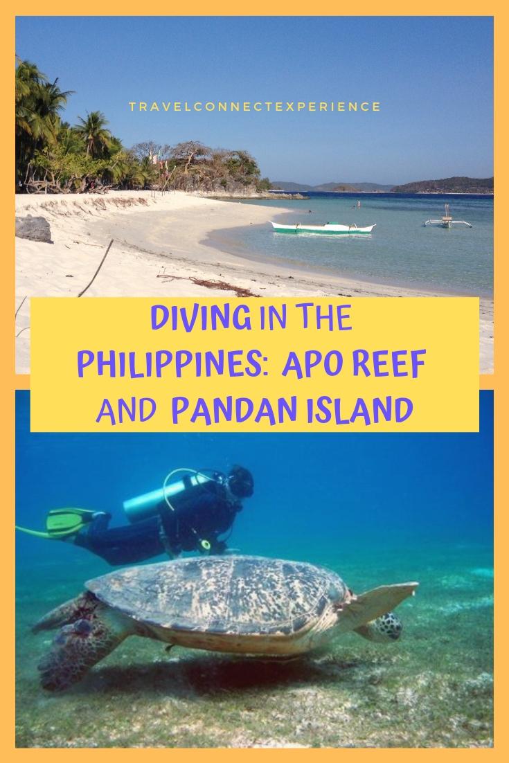 Diving Philippines Apo Reef