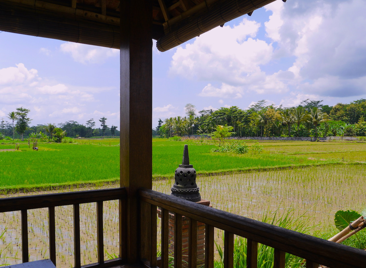 borobudur hotel rice fields